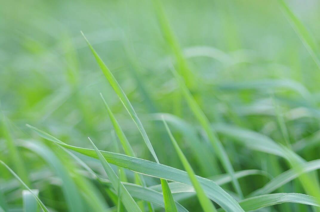 рослина алерген: що саме в цій рослині викликає алергічну реакцію у дітей та дорослих